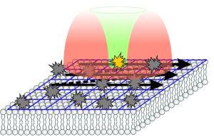 2013_099_Nature_-_Molekuelbewegungen_in_lebenden_Zellen__sehen_72dpi