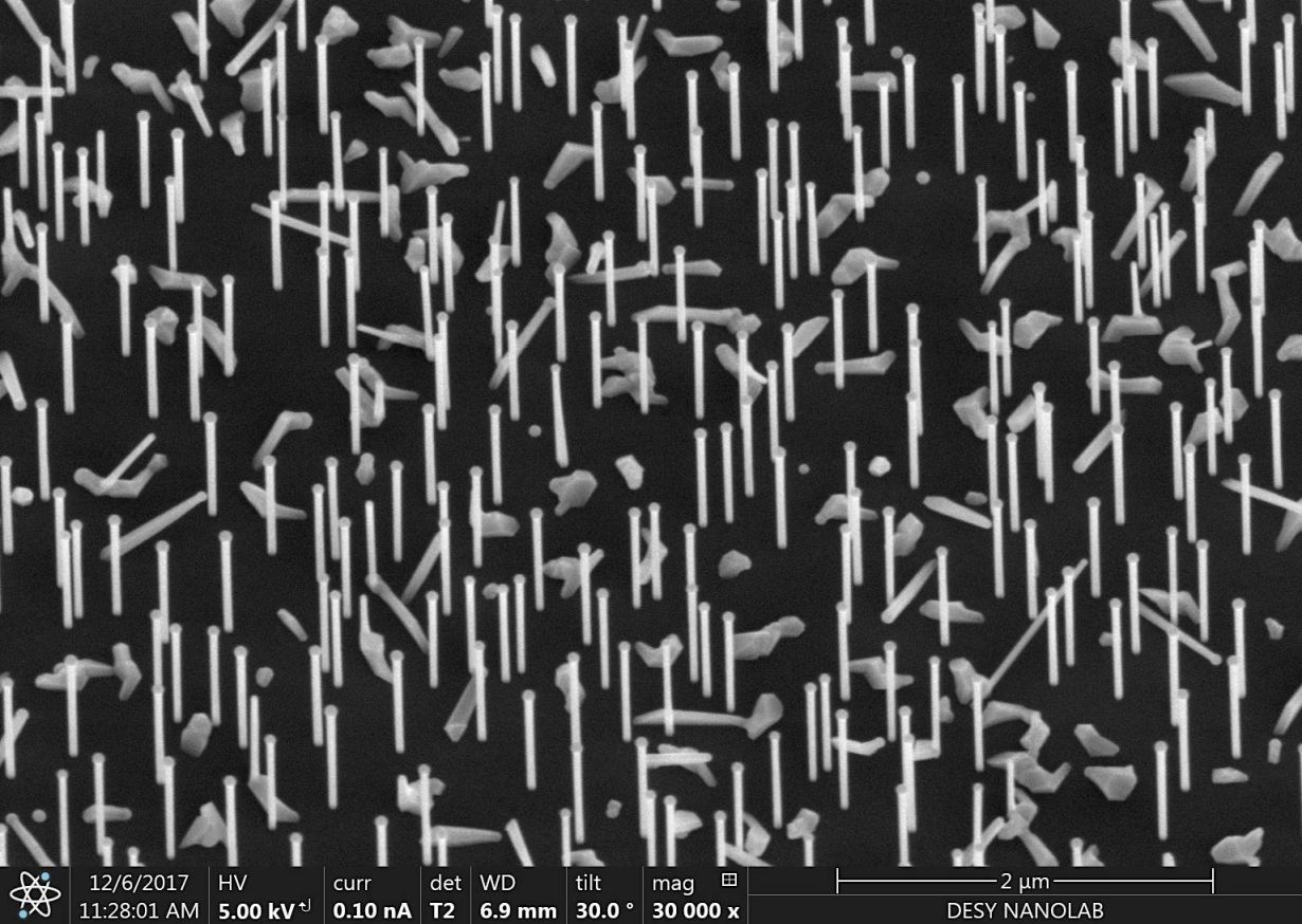 Nanoforest: Nanowires on a silicon wafer as recorded at the DESY NanoLab.    (Photo: DESY, Satishkumar Kulkarni/Thomas Keller)