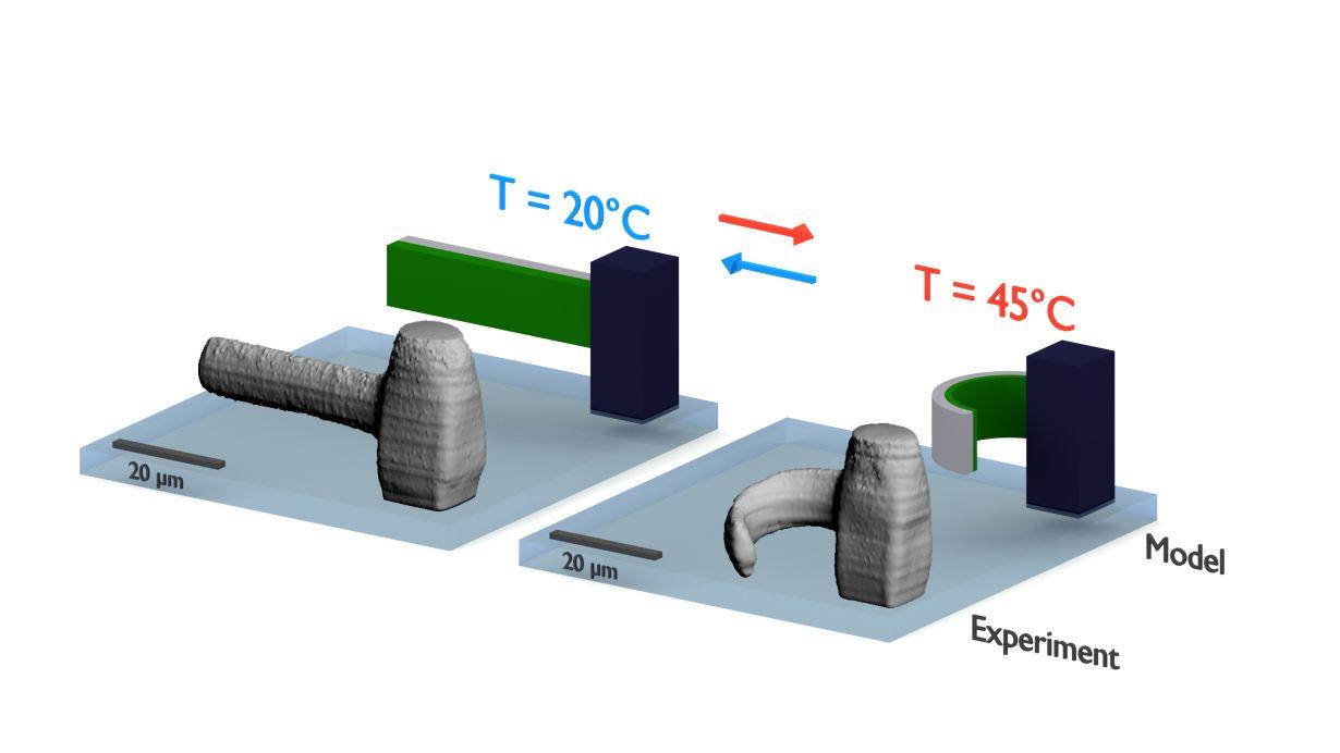 Das richtige Material macht's: Die Objekte aus dem 3D-Drucker sind auch nach dem Druck noch beweglich und können etwa durch Temperaturänderung stimuliert werden. (Grafik: Marc Hippler, KIT)
