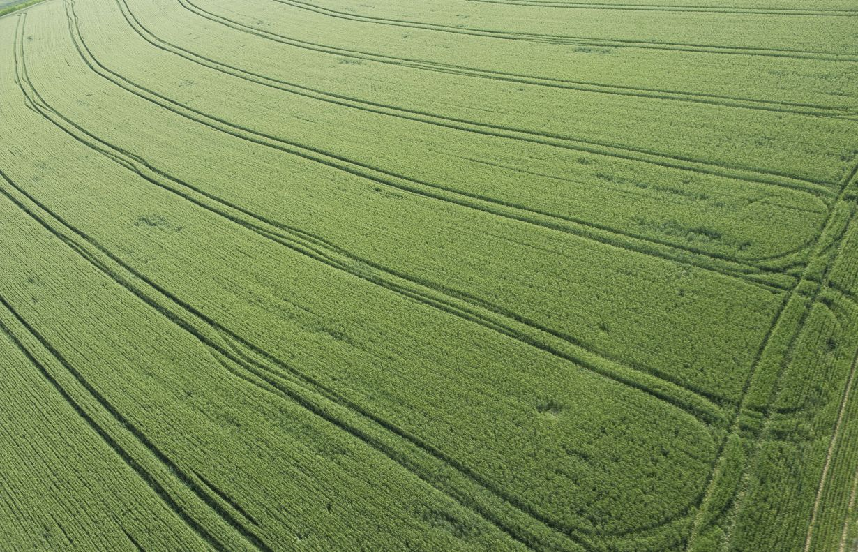 Mixed blessing: the growing global greening is due to increases in agricultural yields – which need fertilization and increased irrigation. (Photo: Markus Breig, KIT)