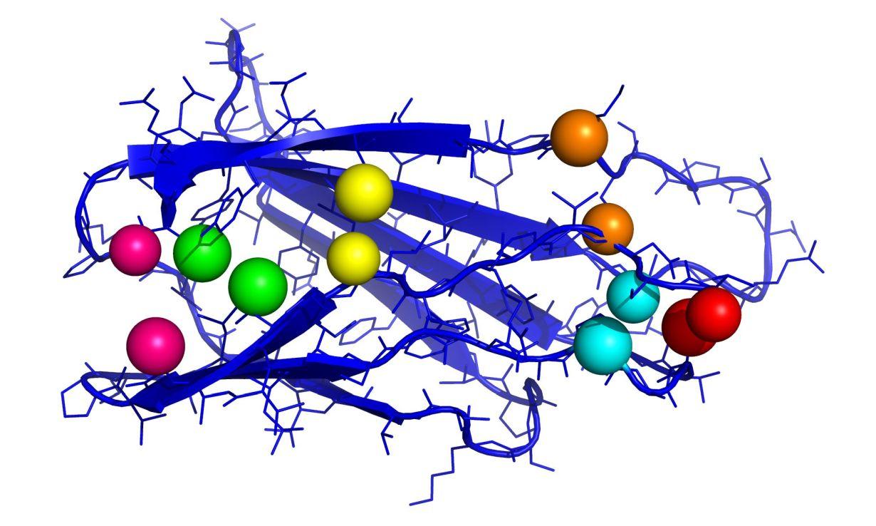Fibronektin spielt bei der Wundheilung eine bedeutende Rolle. Die Grafik zeigt einen wichtigen Teil des Proteins mit Kontaktpaaren (jeweils gleichfarbige Kugeln). (Abbildung: Ines Reinartz, KIT)